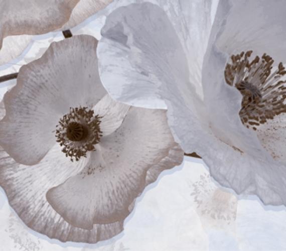Decor faianta flori gri PEONIA 20x60 cm GRIS P2