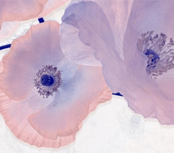 Decor faianta flori lila PEONIA 20x60 cm MALVAP P2