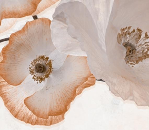 Decor faianta flori maro PEONIA  20x60 cm BEIGE P2