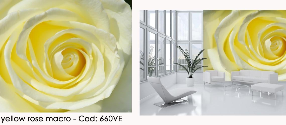 Fototapet trandafir alb