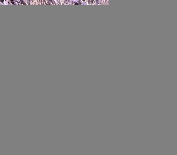 Mocheta gri cu fir lung tip Shaggy gama PORTO cod 97