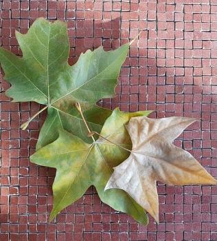 Mozaic ieftin vintage culoare bordo