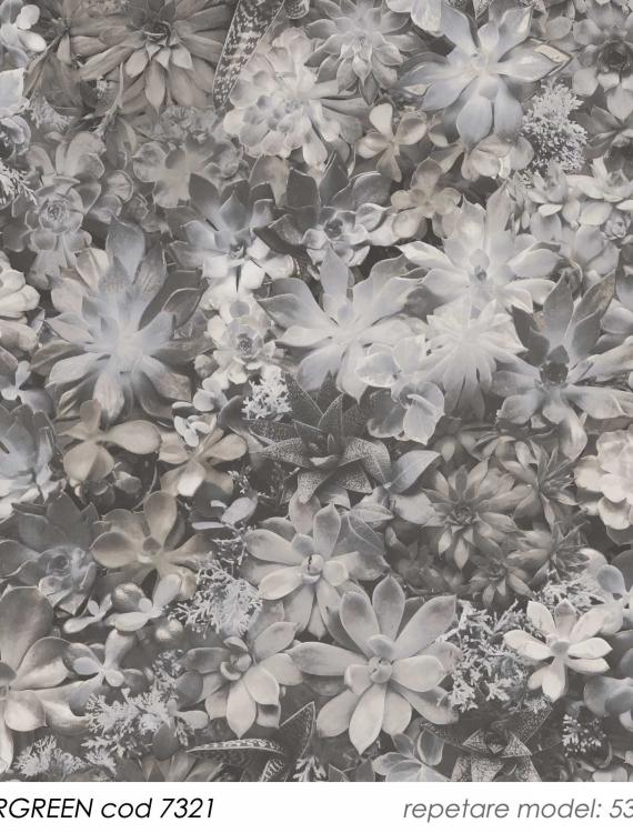 tapet-gri-cactusi-7321